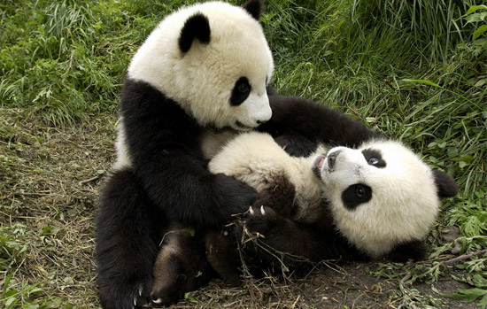 西安秦岭野生动物园门票 秦岭野生动物世界门票 西安景点门票