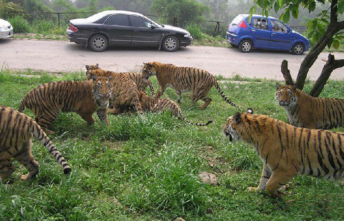 北京野生动物园(大兴)八达岭野生动物园 那个好玩?