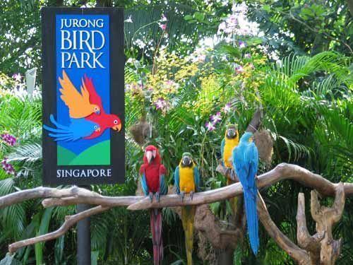 新加坡飞禽公园+夜间野生动物园套票含游园车