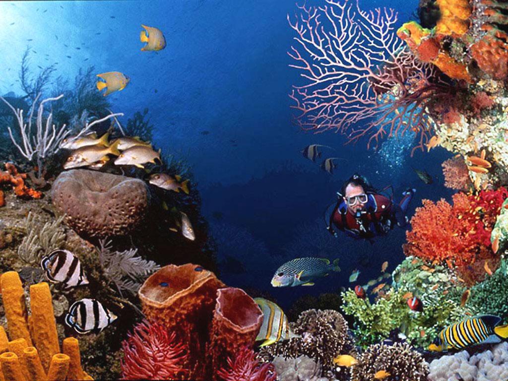 太平洋海底世界门票 (含动感影院门票)