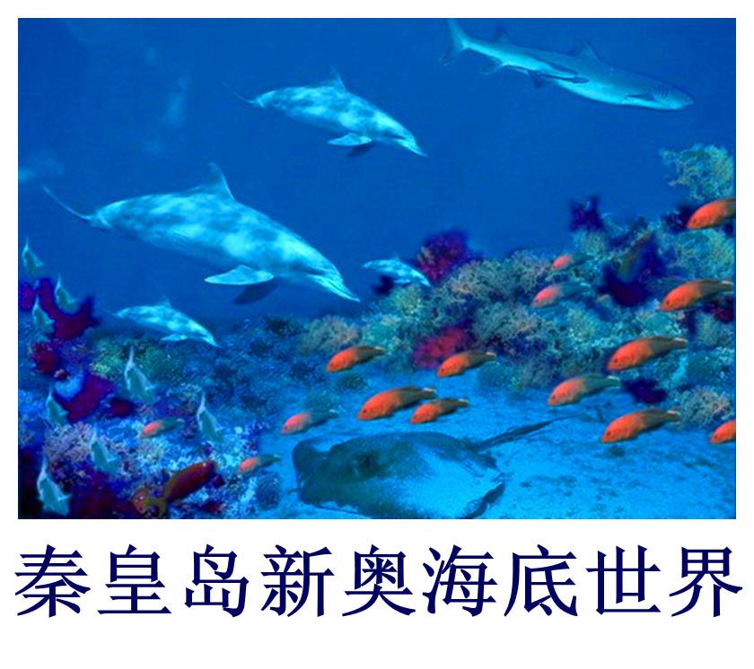 秦皇岛新奥海底世界门票海豚表演+海洋馆实体店学生票旅游门票 景点