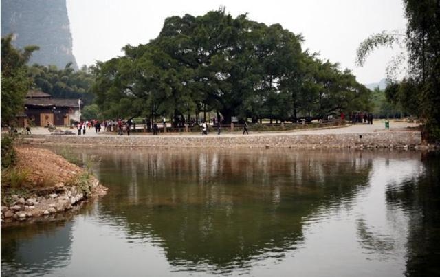 桂林旅游 阳朔景点门票 阳朔十里画廊套票之月亮山大榕树门票图片