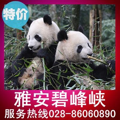 四川雅安碧峰峡门票 风景区加熊猫园