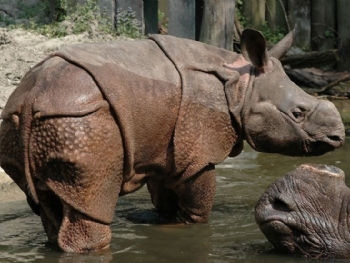 山东青岛森林野生动物世界门票预订