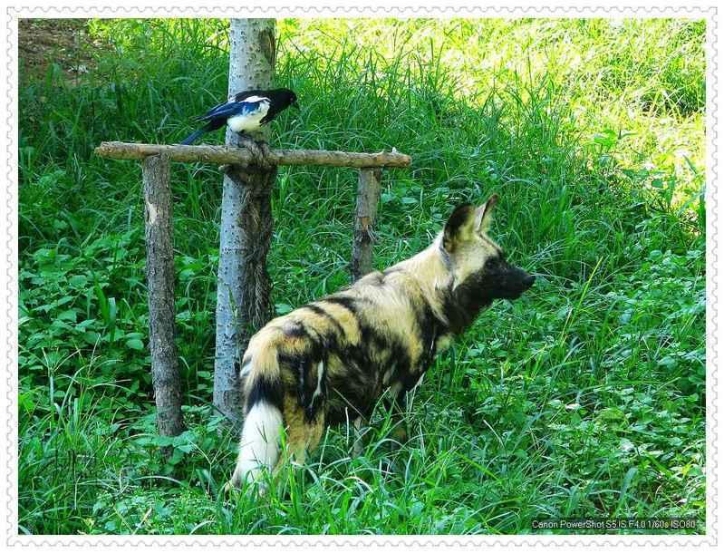 大连森林动物园门票