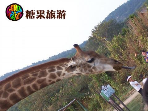 黄岛小珠山森林野生动物园门票|青岛野生动物园通票