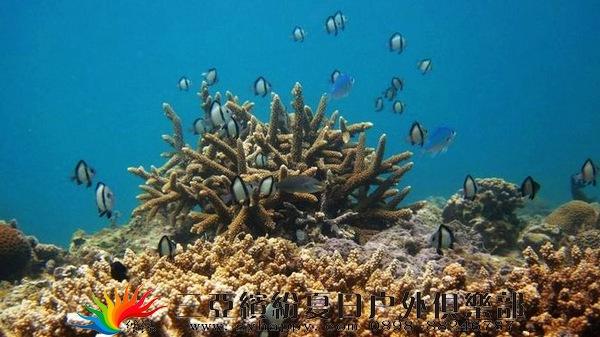 海南三亚旅游/户外纯玩/分界洲岛印象海洋一日游