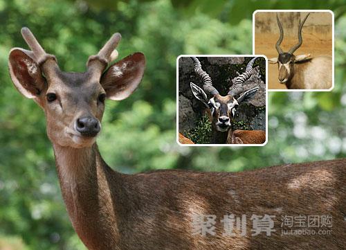 仅售50元畅享原价80元《广州动物园》成人套票一张!