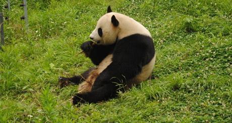 秒杀:【电子票】北京八达岭野生动物园门票
