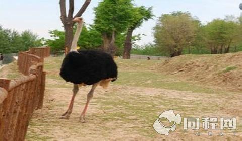 青藏高原野生动物园门票预订