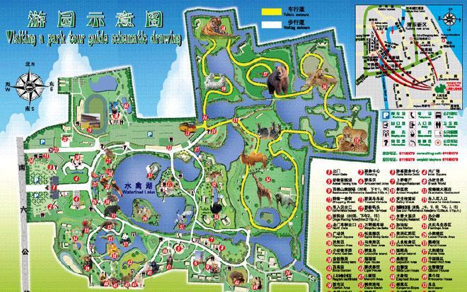 上海野生动物园攻略_上海野生动物园,上海野生最囧游戏185关地址图片