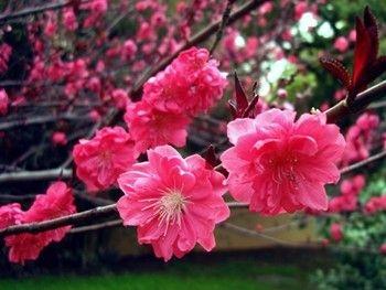 植物园门票 武汉植物园门票预订 4张起武汉市包邮!