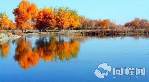 新疆 喀什 泽普金湖杨国家森林公园门票预订自驾游首选 免邮