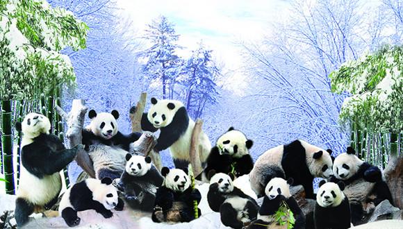 广州长隆门票/长隆香江野生动物园门票/香江动物园