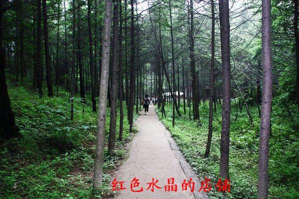 河南洛阳嵩县天池山风景区折扣门票