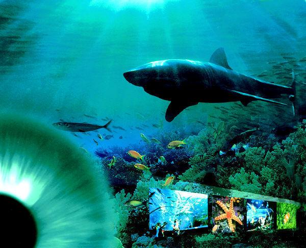 山东最大的海底世界_蓬莱极地海洋世界