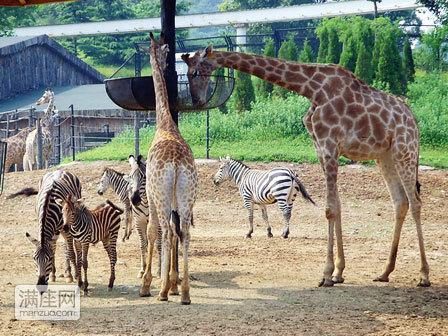 森林动物园/动物园学生套票/一期+二期+索道+大象