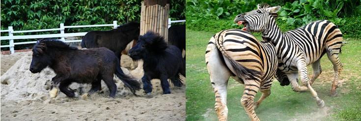 长隆野生动物园门票