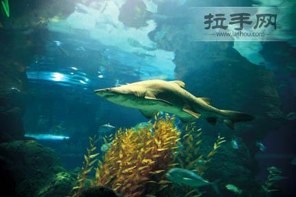 海洋世界门票 成人票/儿童票 电子票 含表演 水族馆   普陀区枣阳路