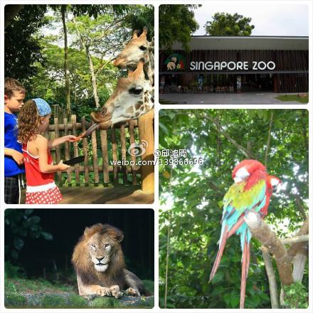 新加坡飞禽公园+日间/夜间野生动物园套票(包邮)门票