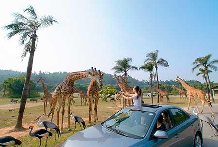 长隆国际大马戏+香江野生动物园