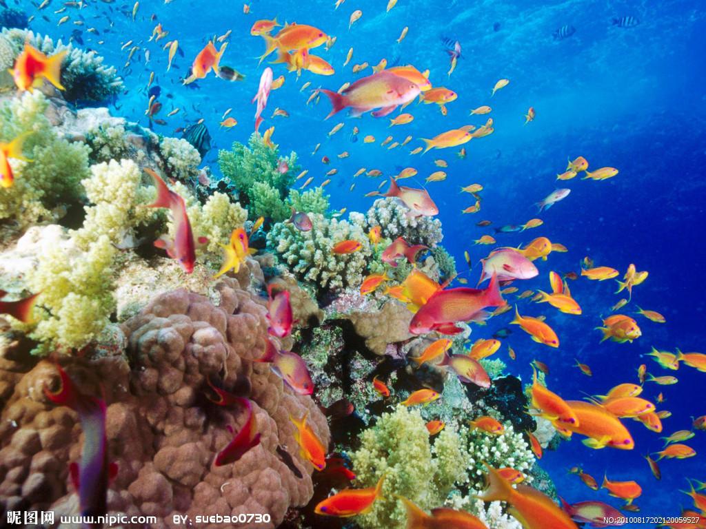 特惠青岛海底世界门票通票