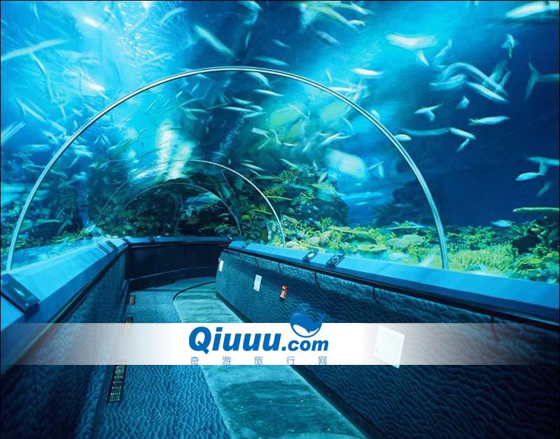 8月特价 上海长风海洋世界 长风海洋公园 省时省钱更省力