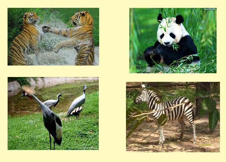 深圳野生动物园门票 野生动物园+海洋天地套票