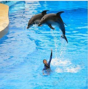 分界洲岛门票+船票+海豚表演票 景点门票信息