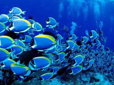 太平洋海底世界门票