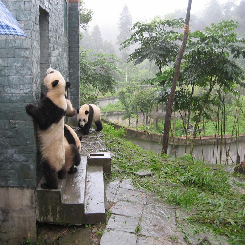 雅安碧峰峡门票,动物园门票,碧峰峡动物园套票,熊猫动物园门票