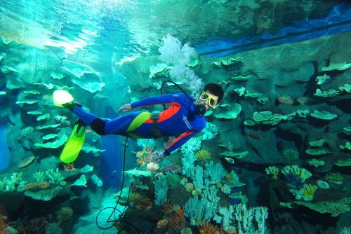 青岛海底世界是现代化大型海洋生态旅游展示项目,集海洋观光旅游与