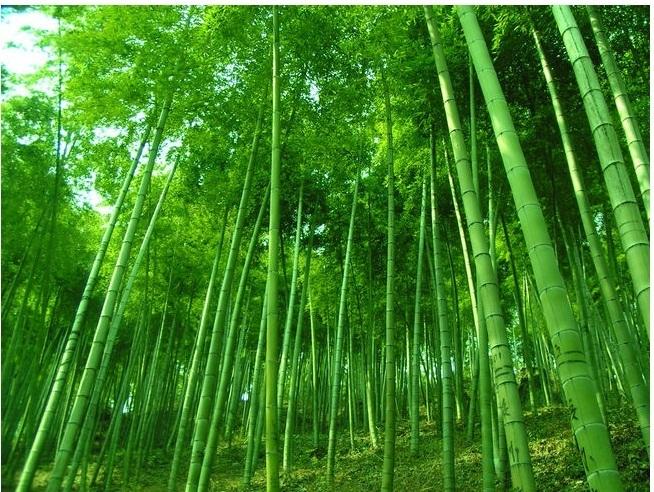 安吉中国大竹海风景区