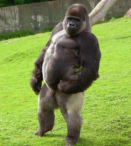 昆明野生动物园|云南动物园+电瓶车|云南野生动物园