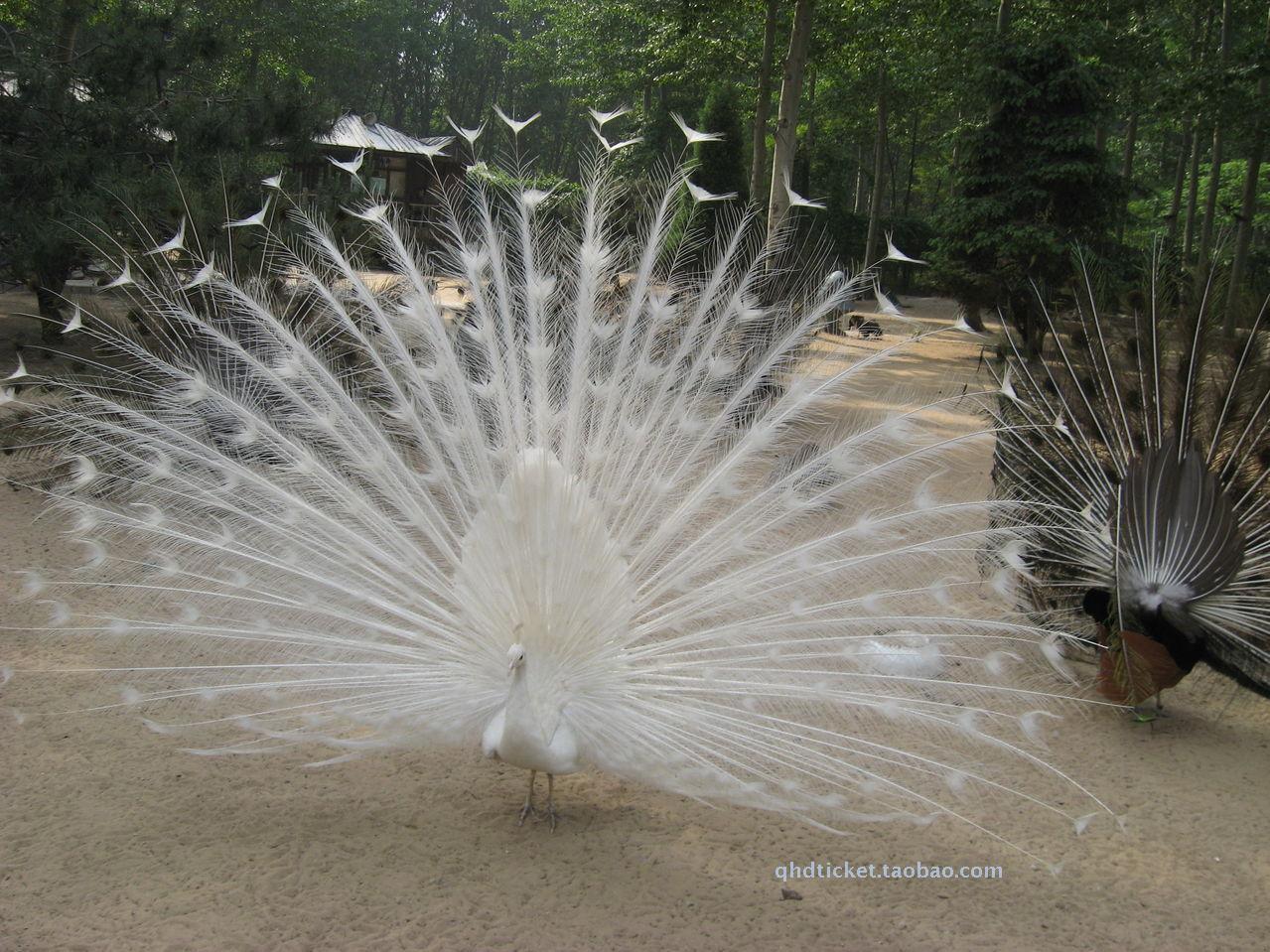 秦皇岛旅游景点野生动物园;