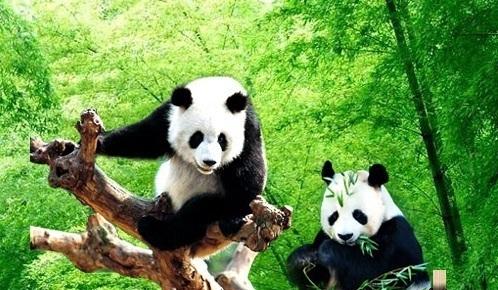 我和熊猫游天下 武逆天下天上掉熊猫 骑着熊猫闯天下