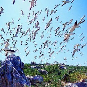 威海景点/野驴岛/西霞口海驴岛风景区优惠门票;;    山东威海荣成旅游