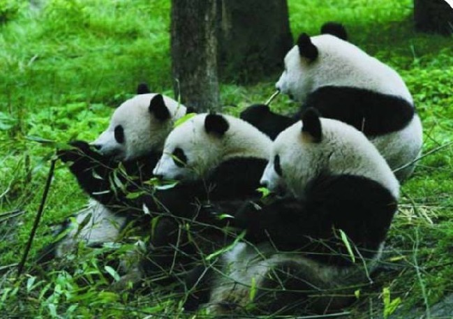 雅安碧峰峡野生动物园门票优惠/到景区付款取票