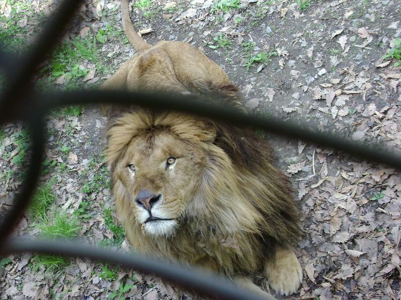 哈尔滨北方森林动物园门票 哈尔滨动物园门票 零度雪线旅行社