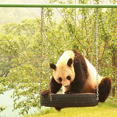 黄岛小珠山森林野生动物园门票|青岛野生动物园通票|开发区旅游