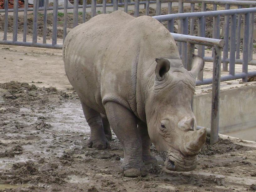 北方森林动物园门票_北方森林动物园_哈尔滨北方森林动物园_北方森林动物园门票